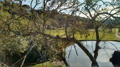 Curitiba sem filtro - Parque Tanguá - corujas #Curitibasemfiltro #ParqueTangua #coruja
