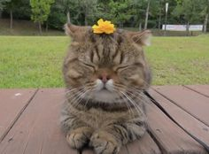 Im a tiger flower! Funny Cute Cats, Cute Baby Cats, Cute Funny Animals, Munchkin Kitten, Cute Reptiles, Pretty Cats, Cat Gif, Fur Babies, Baby Animals