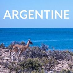Petit guide pour débutant pour venir voyager en Argentine: argent, hébergement, transport, sécurité, santé, itinéraire et bien plus encore!