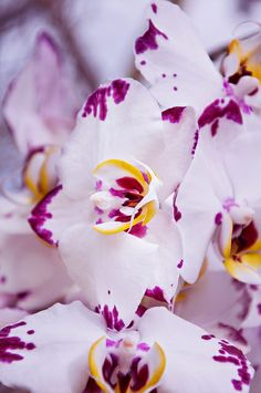 Orchids exhibition by s4bin4h, via Flickr