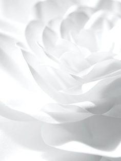 White Flower by Jo Lynn Alcorn All White, Pure White, White Light, Snow White, White Feed, White Flowers, Beautiful Flowers, Beautiful Things, Aesthetic Colors