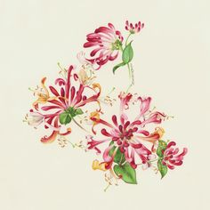 Eunike Nugroho.     Watercolor