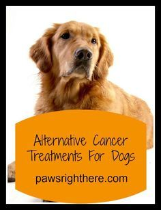 Letting pet owners know that alternative cancer treatments for dogs exist.