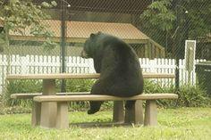 Ja, das Leben ist hart. Auch für einen Bären. Kopf hoch, Meister Petz. Alles wird gut.