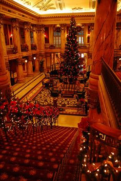 Christmas at The Jefferson Hotel, Richmond, Virginia. So beautiful. Our law school held events here. Christmas Lights, Cosy Christmas, Christmas 2015, Christmas Morning, Xmas, Jefferson Hotel, Virginia Is For Lovers, Richmond Virginia, New City