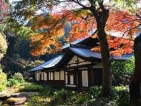 Kamakura• Late November to mid December Several of Kamakura's temples and shrines come with some autumn colors. Due to the town's mild climate, the peak of the season is often not reached until early December.