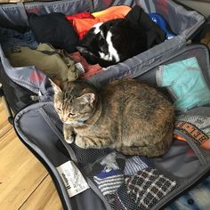 I guess I need to take a break from packing #cats_of_instagram #rescuecats #romainianrescuecat #martha #doris #packing #notmuchhelp http://misstagram.com/ipost/1548549913138116399/?code=BV9jfEBjzcv