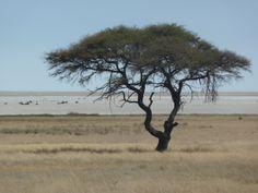 Die Salzpfanne von Etosha darf natürlich nicht fehlen. Ganz früh geht es von der Farm vor dem Nationalpark und vielleicht mit Guide los, um direkt morgens die ersten Tiere an den Wasserlöchern zu beobachten.