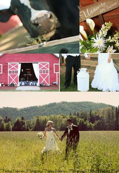 adorable country wedding....#dairy, #cows, #barn, #wedding,