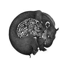 Tapir, 42 x 42 cm, pigment liner on paper