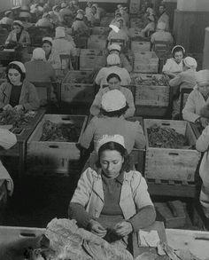 """""""Tütün utanır""""  Turgut Uyar  F: Cibali Tütün Fabrikası #birzamanlar #istanbul #istanlook"""