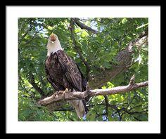 #Ackley #Iowa #Eagle Framed Print By Bonfire #Photography