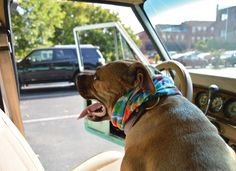Hop in the car! River shares his favorite things to do in Rome, GA. Four Legged, Rome, Your Dog, Stuff To Do, Labrador Retriever, Georgia, Best Friends, Favorite Things, Puppies