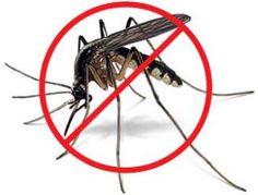 Natural Homemade Mosquito Repellent Recipe