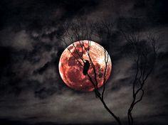 "Saatchi Online Artist Steven Sandner; Photography, ""Red Moon Rising"" #art"