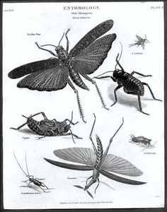 Insects art 1922 Vintage Old insects print bugs art