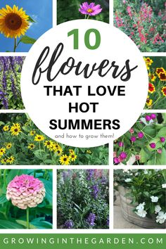 10 Flowers that Love Hot Summers and How to Grow Them Growing In The Garden is part of Summer plants Wondering which annual flowers can take the heat of an Arizona summer Here are 10 flowers tha - When To Plant Sunflowers, Planting Sunflowers, How To Plant Flowers, Summer Plants, Summer Flowers, Wild Flowers, Full Sun Flowers, Tropical Flowers, Flowers Garden
