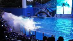 THE BIG 5: Top five reasons why SeaWorld should be part of your next Orlando vacation