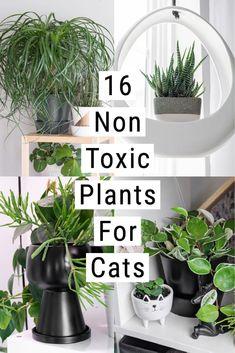 Cat Safe House Plants, House Plants Decor, Plant Decor, Cactus House Plants, Toxic Plants For Cats, Cat Plants, Garden Plants, Indoor Garden, Indoor Plants