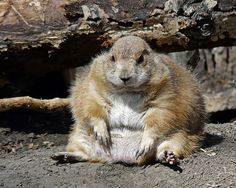 Wait a minute! That's a prairie dog