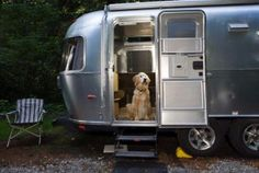 Tips for Camping with Pets!