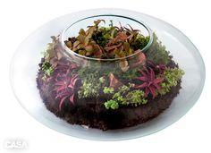 Tenha uma microfloresta em casa: monte um terrário