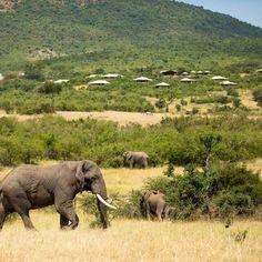 The best Botswana safari holidays | CN Traveller Places To Travel, Places To See, Safari Holidays, Okavango Delta, African Safari, Countries Of The World, Lodges, Elephants, Traveling