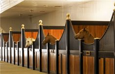 low stall fronts by Lucas Equine