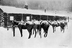 Frederic+Remington+-+Cow+Pony+Pathos.jpg (640×427)