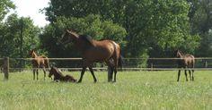 Pferde im Ruhrgebiet/ Foto: Ruhl
