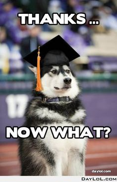"""I imagine my college graduation to look something like this."" haha funny husky in a graduation cap Memes Humor, Funny Dog Memes, Funny Dogs, Funny Animals, Cute Animals, Funny Husky, Husky Meme, Husky Puppy, Funny Shit"