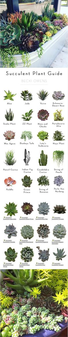 #Succulent Identification Guide. A trough of plants would be so cool on my new patio!