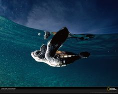 National Geographic: Photo of the Day: 10/11/08
