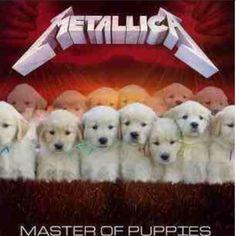 Puppies Like em both :) puppy dog dogs cute pet pets thrash megadeth Metallica music Metallica Meme, Metallica Music, Metal Memes, Emo Rock, Music Memes Funny, Master Of Puppets, Band Memes, Heavy Metal Bands, Thrash Metal