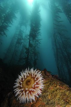 Kelp forests support both the health of marine ecosystems and the economics of coastal regions. (photo: Kendra Karr)
