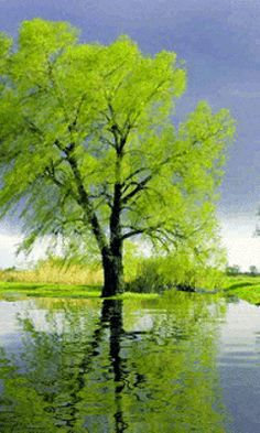 Download Animated 240x400 «Green tree» Cell Phone Wallpaper. Category: Nature