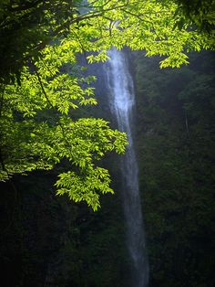 Amidaga Falls in Gujo, Gifu, Japan 阿弥陀が滝