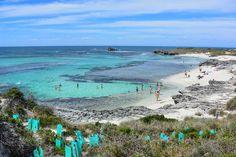 A #blissful day at #TheBasin in #rottnestisland. Also a #cool spot to go #snorkeling!  #thisisWA #westernaustralia #westisbest #travel #wanderlust #rottnest #ocean #life #fish #snorkel #swim #shotsbymv #nikon #amazing_wa #igworldclub #ig_australia #instagood #igers #instatravel #australia #wawaters #seeaustralia #ontheroad #traveling #travelstoke by shotsbymv http://ift.tt/1L5GqLp