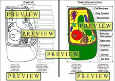 Plant Cell Diagram Worksheet plant cell diagram