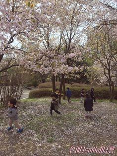 미술활동::벚꽃꾸미기/만들기/봄꽃만들기/벚꽃활동모음 : 네이버 블로그 Country Roads
