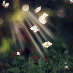 White Flower and Butterflies GIF Gif Pictures, Background Pictures, Gif Animé, Animated Gif, Book Gif, Butterfly Gif, Gb Bilder, Beautiful Gif, Cute Gif