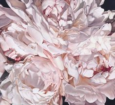 thomas-darnell-peonies-close-up-wall-mural-art-96