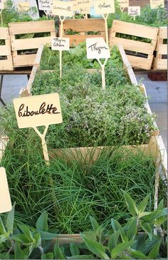 just maybe this summer...my  herb garden