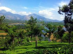 Munnar Most Beautiful places in India you must visit.
