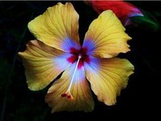 Coming Out of the Dark by scenicviewphotos on Etsy, $27.50