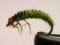 FlyTyingForum.com - Rhyacophila larva (Edwards)