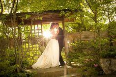 Anderson Japanese Gardens, Rockford, IL... soo beautiful!