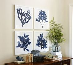 Framed Coral Prints - Indigo | Pottery Barn