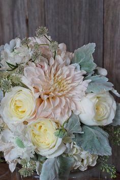 Cafe au lait dahlias, garden roses, dusty miller.  I must have these dahlias
