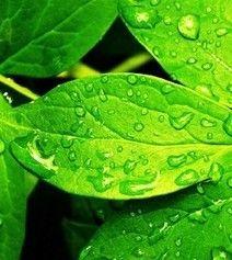 Dolor crónico en cabeza y espalda, y los beneficios de una sencilla planta. http://www.farmaciafrancesa.com/main.asp?Familia=189&Subfamilia=223&cerca=familia&pag=1